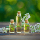 6 Facts About Valerian Essential Oil You Shouldn't Miss